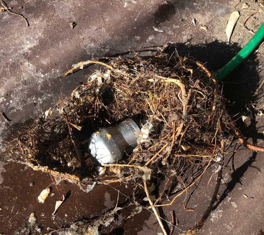 blocked drain tree roots kenec plumbing and gas